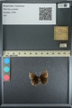http://mczbase.mcz.harvard.edu/specimen_images/ent-lepidoptera/images/2013_08_02/IMG_147448.JPG