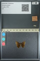 http://mczbase.mcz.harvard.edu/specimen_images/ent-lepidoptera/images/2013_08_02/IMG_147453.JPG