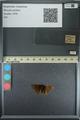 http://mczbase.mcz.harvard.edu/specimen_images/ent-lepidoptera/images/2013_08_02/IMG_147454.JPG
