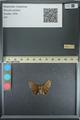 http://mczbase.mcz.harvard.edu/specimen_images/ent-lepidoptera/images/2013_08_02/IMG_147456.JPG