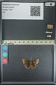 http://mczbase.mcz.harvard.edu/specimen_images/ent-lepidoptera/images/2013_08_02/IMG_147462.JPG