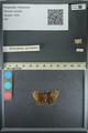 http://mczbase.mcz.harvard.edu/specimen_images/ent-lepidoptera/images/2013_08_02/IMG_147465.JPG