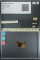 http://mczbase.mcz.harvard.edu/specimen_images/ent-lepidoptera/images/2013_08_02/IMG_147467.JPG