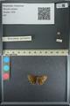 http://mczbase.mcz.harvard.edu/specimen_images/ent-lepidoptera/images/2013_08_02/IMG_147468.JPG