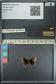 http://mczbase.mcz.harvard.edu/specimen_images/ent-lepidoptera/images/2013_08_02/IMG_147471.JPG