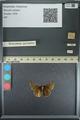 http://mczbase.mcz.harvard.edu/specimen_images/ent-lepidoptera/images/2013_08_02/IMG_147476.JPG