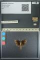 http://mczbase.mcz.harvard.edu/specimen_images/ent-lepidoptera/images/2013_08_02/IMG_147477.JPG