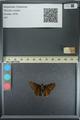 http://mczbase.mcz.harvard.edu/specimen_images/ent-lepidoptera/images/2013_08_02/IMG_147478.JPG