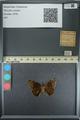 http://mczbase.mcz.harvard.edu/specimen_images/ent-lepidoptera/images/2013_08_02/IMG_147479.JPG