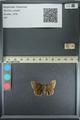 http://mczbase.mcz.harvard.edu/specimen_images/ent-lepidoptera/images/2013_08_02/IMG_147480.JPG