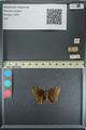 http://mczbase.mcz.harvard.edu/specimen_images/ent-lepidoptera/images/2013_08_02/IMG_147482.JPG