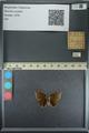 http://mczbase.mcz.harvard.edu/specimen_images/ent-lepidoptera/images/2013_08_02/IMG_147483.JPG