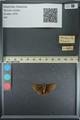 http://mczbase.mcz.harvard.edu/specimen_images/ent-lepidoptera/images/2013_08_02/IMG_147484.JPG