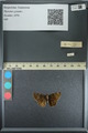 http://mczbase.mcz.harvard.edu/specimen_images/ent-lepidoptera/images/2013_08_02/IMG_147485.JPG