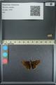http://mczbase.mcz.harvard.edu/specimen_images/ent-lepidoptera/images/2013_08_02/IMG_147487.JPG