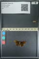 http://mczbase.mcz.harvard.edu/specimen_images/ent-lepidoptera/images/2013_08_02/IMG_147489.JPG