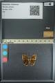 http://mczbase.mcz.harvard.edu/specimen_images/ent-lepidoptera/images/2013_08_02/IMG_147491.JPG