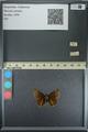 http://mczbase.mcz.harvard.edu/specimen_images/ent-lepidoptera/images/2013_08_02/IMG_147492.JPG