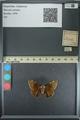 http://mczbase.mcz.harvard.edu/specimen_images/ent-lepidoptera/images/2013_08_02/IMG_147500.JPG