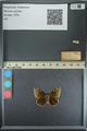 http://mczbase.mcz.harvard.edu/specimen_images/ent-lepidoptera/images/2013_08_02/IMG_147504.JPG