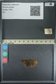 http://mczbase.mcz.harvard.edu/specimen_images/ent-lepidoptera/images/2013_08_02/IMG_147506.JPG
