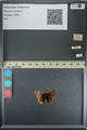 http://mczbase.mcz.harvard.edu/specimen_images/ent-lepidoptera/images/2013_08_02/IMG_147507.JPG