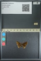 http://mczbase.mcz.harvard.edu/specimen_images/ent-lepidoptera/images/2013_08_02/IMG_147508.JPG