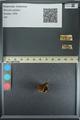 http://mczbase.mcz.harvard.edu/specimen_images/ent-lepidoptera/images/2013_08_02/IMG_147509.JPG