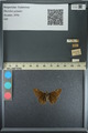 http://mczbase.mcz.harvard.edu/specimen_images/ent-lepidoptera/images/2013_08_02/IMG_147510.JPG