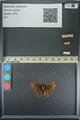 http://mczbase.mcz.harvard.edu/specimen_images/ent-lepidoptera/images/2013_08_02/IMG_147512.JPG