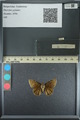 http://mczbase.mcz.harvard.edu/specimen_images/ent-lepidoptera/images/2013_08_02/IMG_147513.JPG