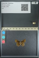 http://mczbase.mcz.harvard.edu/specimen_images/ent-lepidoptera/images/2013_08_02/IMG_147514.JPG
