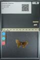 http://mczbase.mcz.harvard.edu/specimen_images/ent-lepidoptera/images/2013_08_02/IMG_147515.JPG