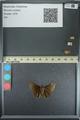 http://mczbase.mcz.harvard.edu/specimen_images/ent-lepidoptera/images/2013_08_02/IMG_147516.JPG