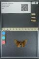 http://mczbase.mcz.harvard.edu/specimen_images/ent-lepidoptera/images/2013_08_03/IMG_147519.JPG