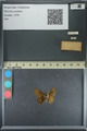 http://mczbase.mcz.harvard.edu/specimen_images/ent-lepidoptera/images/2013_08_03/IMG_147521.JPG