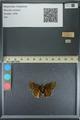 http://mczbase.mcz.harvard.edu/specimen_images/ent-lepidoptera/images/2013_08_03/IMG_147522.JPG