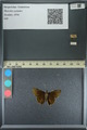 http://mczbase.mcz.harvard.edu/specimen_images/ent-lepidoptera/images/2013_08_03/IMG_147523.JPG