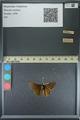http://mczbase.mcz.harvard.edu/specimen_images/ent-lepidoptera/images/2013_08_03/IMG_147524.JPG