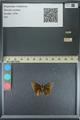 http://mczbase.mcz.harvard.edu/specimen_images/ent-lepidoptera/images/2013_08_03/IMG_147525.JPG