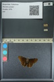 http://mczbase.mcz.harvard.edu/specimen_images/ent-lepidoptera/images/2013_08_03/IMG_147529.JPG