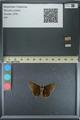 http://mczbase.mcz.harvard.edu/specimen_images/ent-lepidoptera/images/2013_08_03/IMG_147531.JPG