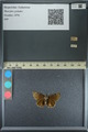 http://mczbase.mcz.harvard.edu/specimen_images/ent-lepidoptera/images/2013_08_03/IMG_147533.JPG