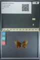 http://mczbase.mcz.harvard.edu/specimen_images/ent-lepidoptera/images/2013_08_03/IMG_147534.JPG
