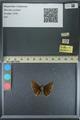 http://mczbase.mcz.harvard.edu/specimen_images/ent-lepidoptera/images/2013_08_03/IMG_147535.JPG