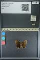 http://mczbase.mcz.harvard.edu/specimen_images/ent-lepidoptera/images/2013_08_03/IMG_147538.JPG