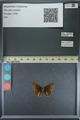 http://mczbase.mcz.harvard.edu/specimen_images/ent-lepidoptera/images/2013_08_03/IMG_147541.JPG