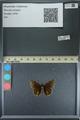 http://mczbase.mcz.harvard.edu/specimen_images/ent-lepidoptera/images/2013_08_03/IMG_147542.JPG