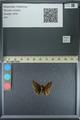 http://mczbase.mcz.harvard.edu/specimen_images/ent-lepidoptera/images/2013_08_03/IMG_147545.JPG