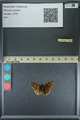 http://mczbase.mcz.harvard.edu/specimen_images/ent-lepidoptera/images/2013_08_03/IMG_147546.JPG